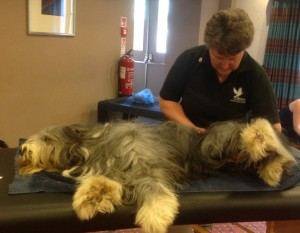 Sarah Training For Her Canine Massage Qualification